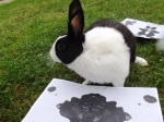 Figure 3: Dutch rabbit and inkblot (personality) test. Photo: C Ellis 2013.