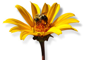 bee_in_flower
