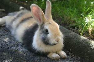 Rabbit survey photo